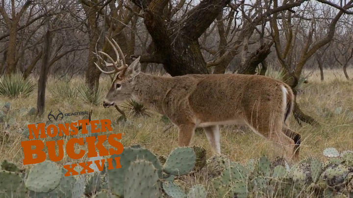 Monster Bucks 27: Bill Jordan Deer Hunts in Texas Preview Image