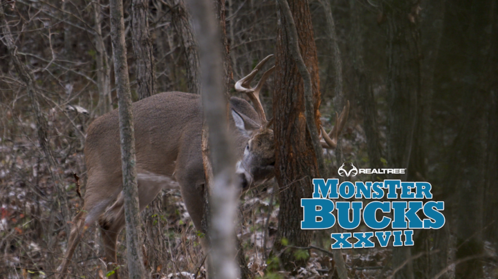Monster Bucks 27: David Holder Hunts Over Rub Line from a Ground Blind Preview Image