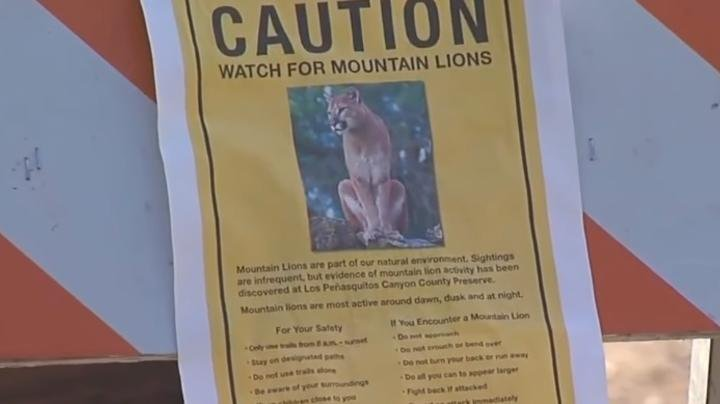 Father Fights Off Mountain Lion Attacking His Young Son Preview Image