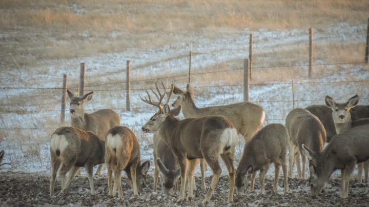 5 Things to Know About Big Mule Deer Preview Image