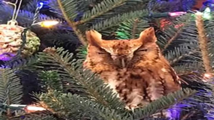 There's an Owl in the Christmas Tree Preview Image