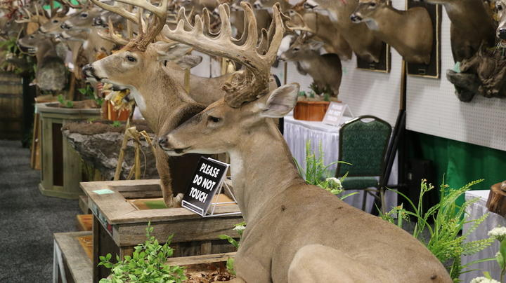20 Crazy Good Deer Mounts from the NWTF Convention Preview Image