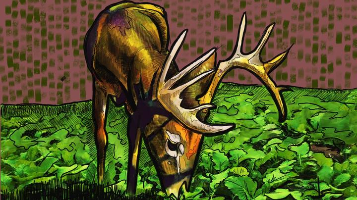 7 Best Food Plot Shapes for Bowhunting Whitetails Preview Image