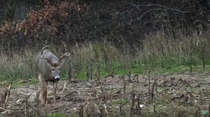 Monster Bucks: Tyler Rees' Huge Iowa 10-Pointer Preview Image