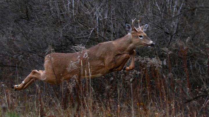 2019 Whitetail Report: The States Tagging the Youngest and Oldest Bucks Preview Image