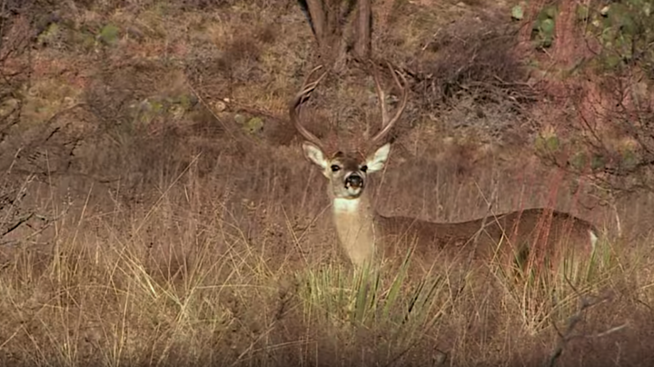 Monster Bucks: David Blanton Tags a Texas Buck in February Preview Image