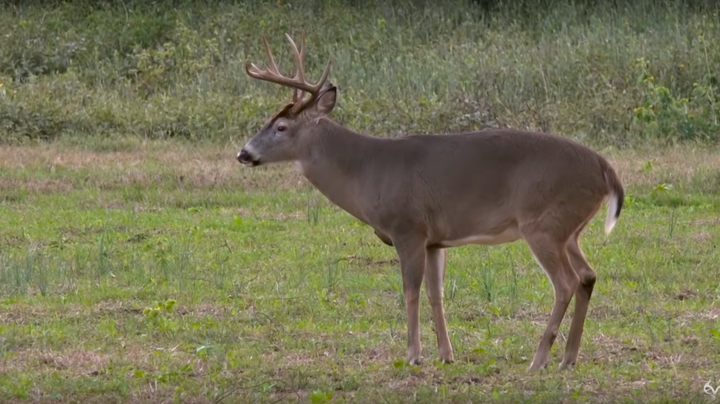 Bill and Colton Jordan Tag Two Big Bucks in One Afternoon Preview Image