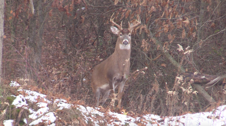 Deer Hunting the Golden Triangle in Illinois Preview Image
