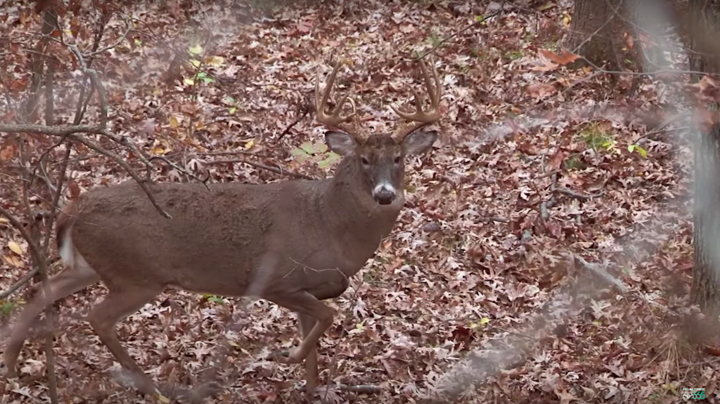 Monster Bucks: Nate Hosie Rattles up a Bruiser Preview Image