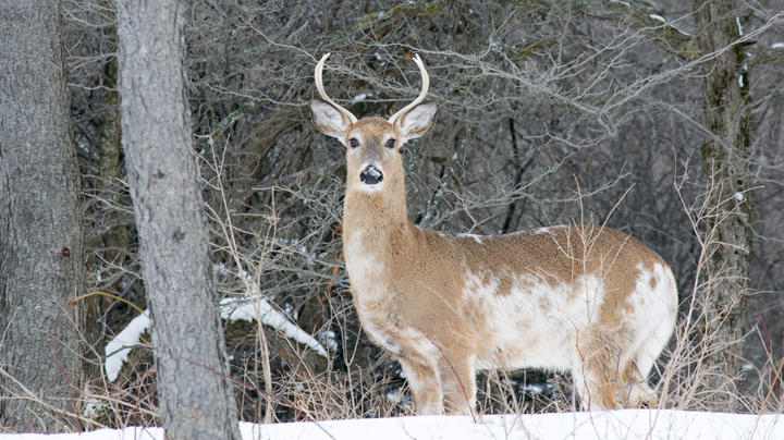 10 Things to Know About Deer Hunting Mythology Preview Image