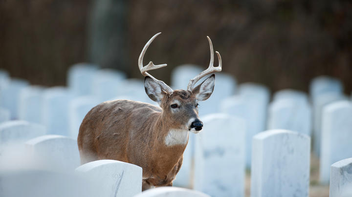 Where Is the Craziest Place You've Seen a Deer? Preview Image