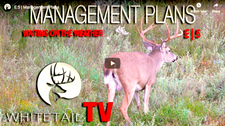 Whitetail TV: Management Plans Preview Image