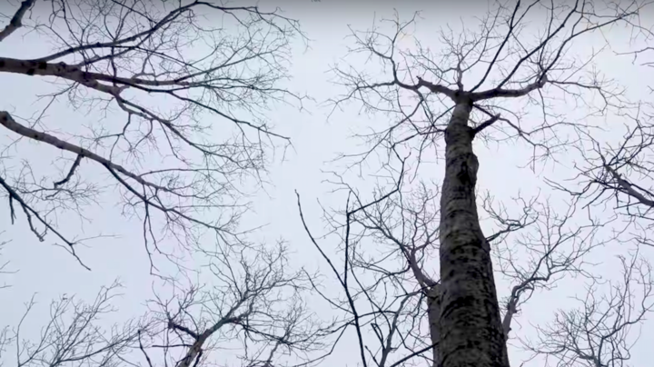 Whitetail TV: Timber Stand Improvement Tips Preview Image