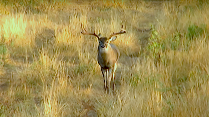 Bill Jordan Tags Crazy-Wide Buck Preview Image