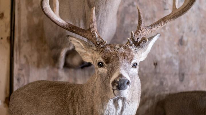The Top 10 Deer Hunting Blog Posts of 2018 Preview Image