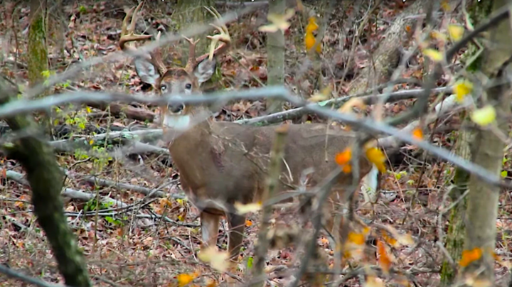 Monster Bucks: Bowhunter Arrows One-Eyed Drop-Tine Buck Preview Image