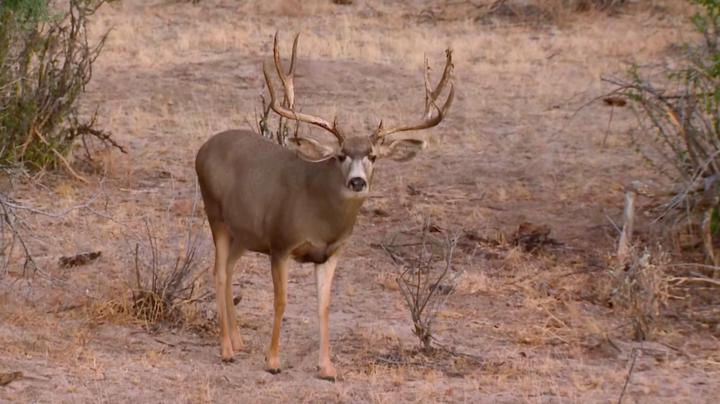 Monster Bucks: Gregg Ritz Crossbow Hunts a Huge Mule Deer Preview Image