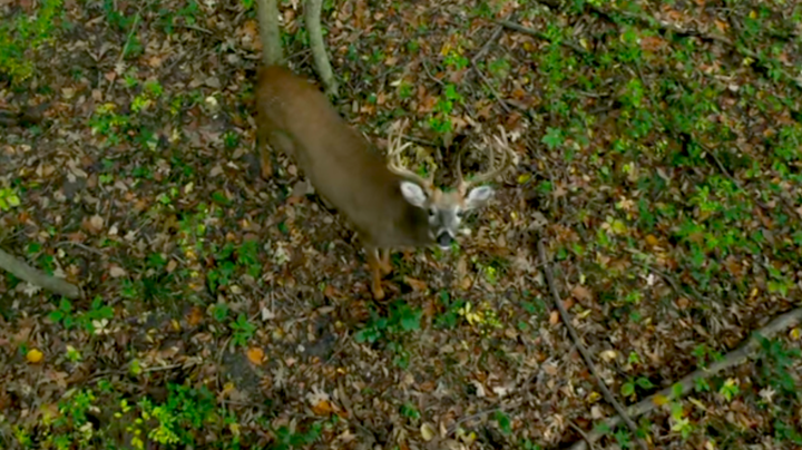 Midwest Whitetail: Do Deer Have a Sixth Sense? Preview Image