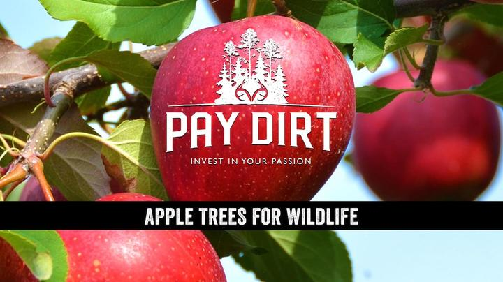 Pay Dirt: Planting Apple Trees for Deer Preview Image