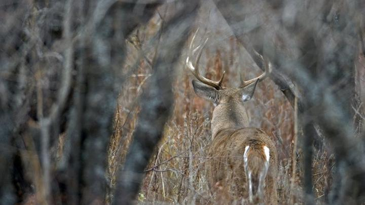 The Top 5 Hunting Land Management Articles of 2018 Preview Image