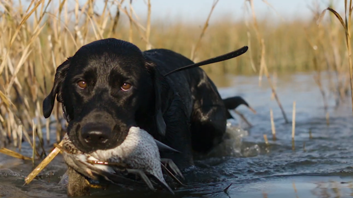Delta Waterfowl October 2019 Migration Report Preview Image