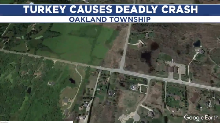 Wild Turkey Causes Deadly Motorcycle Crash Preview Image