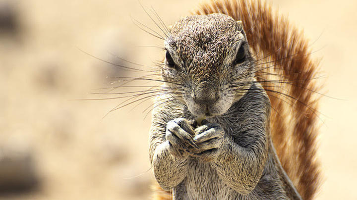 The Day the Squirrel Went Berserk in the Vestavia Hills United Methodist Church Preview Image
