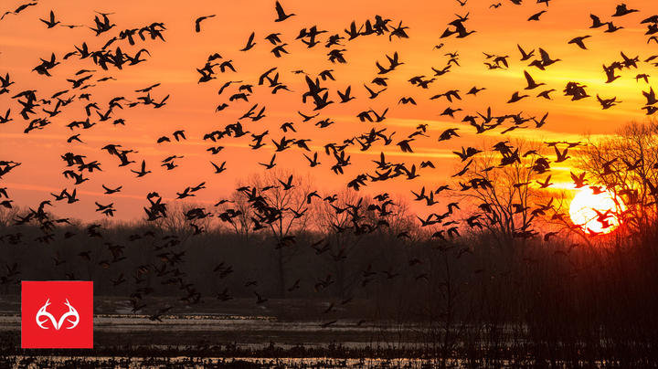 The X: Waterfowl Tip: How to Deal with Nocturnal Feeding Preview Image