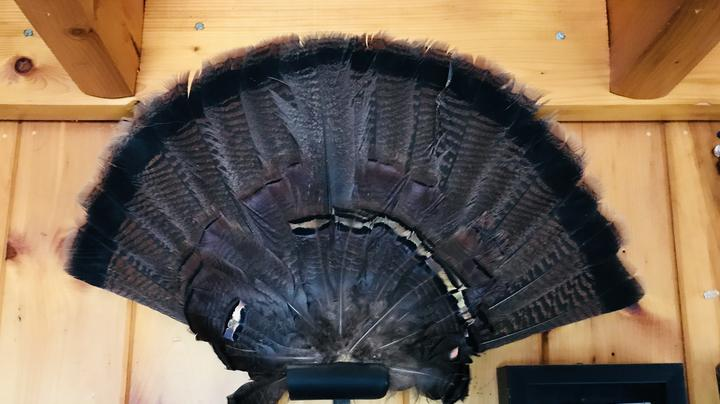 Make Your Own Turkey Fan Mount Preview Image