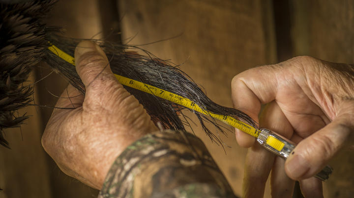 Why Turkey Hunting Beard Lengths are Controversial Preview Image