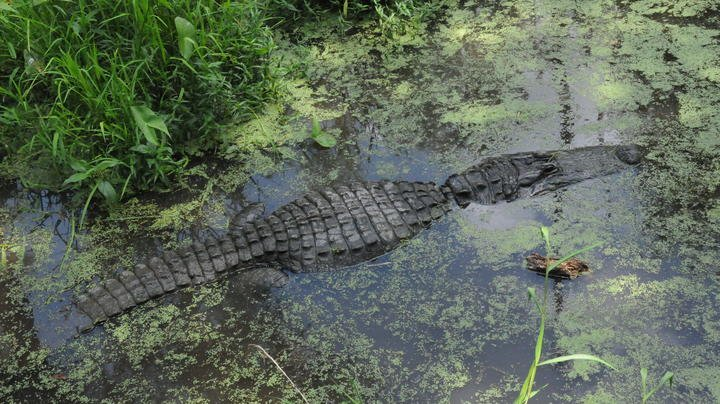 Woman and Child Climb Into Alligator Pit to Retrieve Wallet Preview Image
