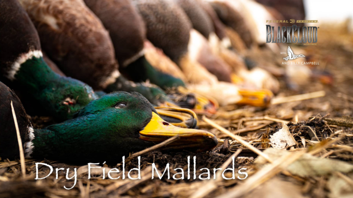Realtree 365: South Dakota Throwback, Delta Ducks and Deer Preview Image