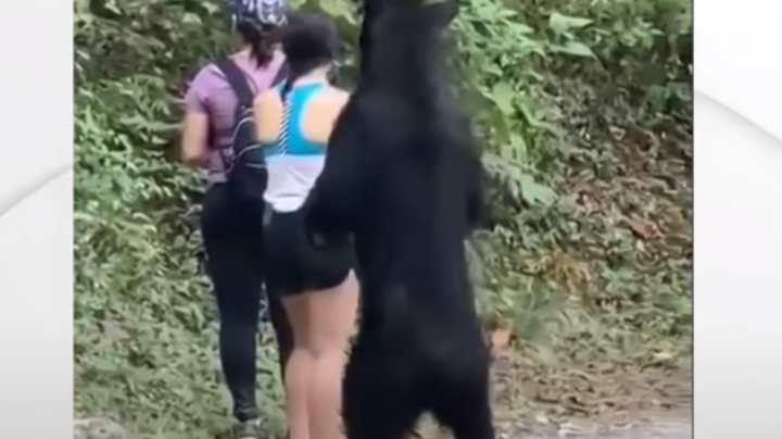 Curious Bear Gets Up Close and Personal With Hikers Preview Image