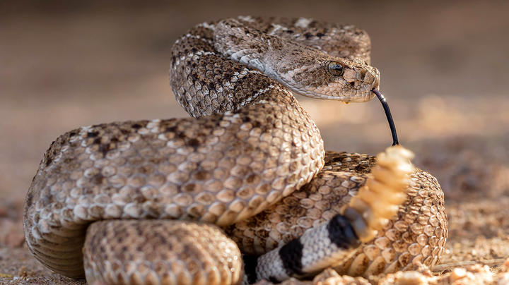 4-Year-Old Alabama Boy Bitten by Rattlesnake in Driveway Preview Image