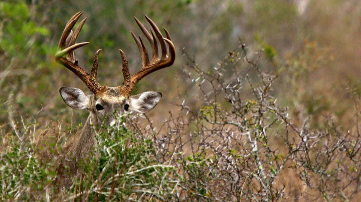 9 Things to Know About Deer Hunting in 2020 Preview Image