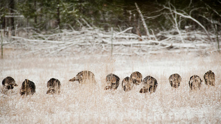 Best States for Winter Turkey Hunting Preview Image