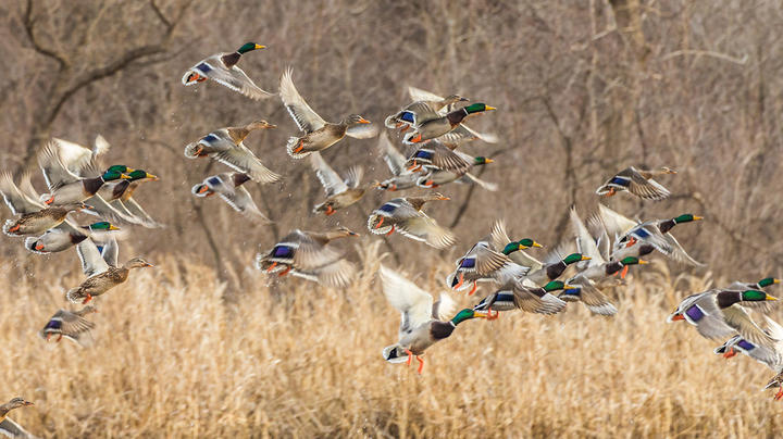 Delta Waterfowl Video: Why More Wetlands Mean More Ducks Preview Image