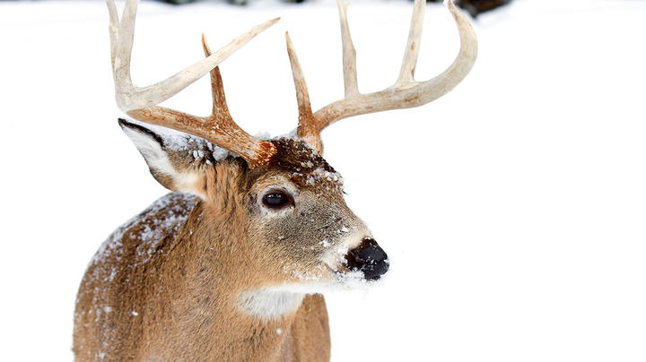 6 Killer Strategies for Late-Season Deer Hunting Preview Image