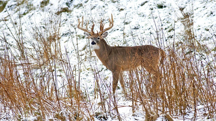 5 Best Places for Snow Tracking Bucks Preview Image