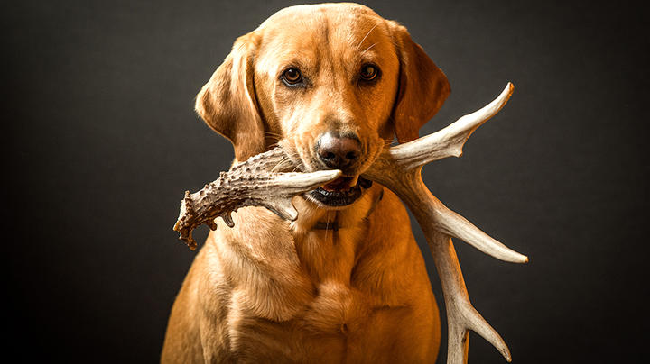 Best Dog Breeds for Shed Hunters Preview Image