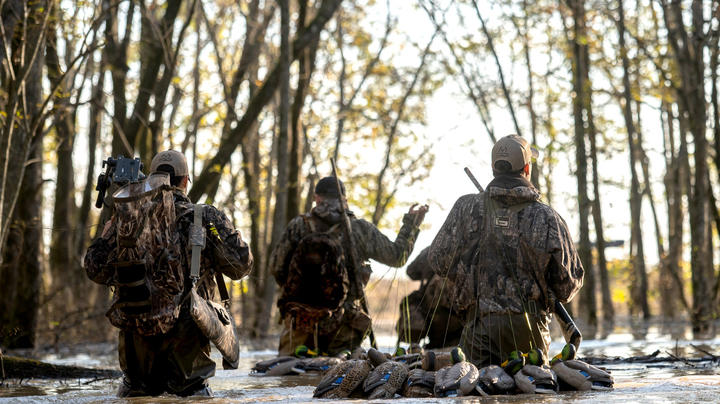 How Will the Pandemic Affect Waterfowl Season? Preview Image