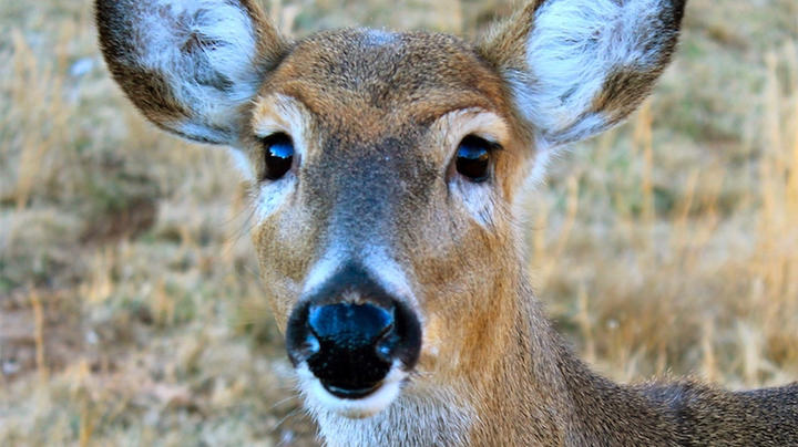 April Deer Hunting News Roundup Preview Image