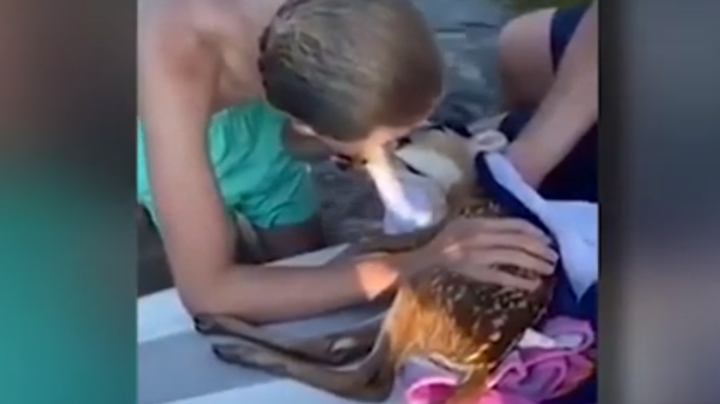 Boaters Give Drowning Fawn CPR  Preview Image