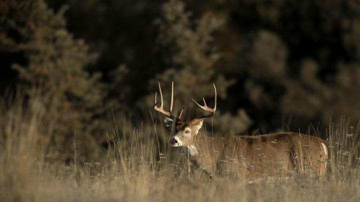 Are Trail Cameras Affecting Your Hunting Experience?  Preview Image
