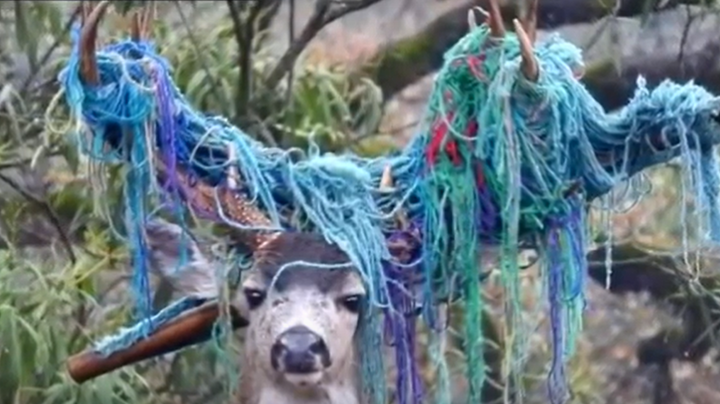 California Wildlife Officials Remove Hammock from Buck's Antlers Preview Image