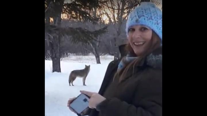 "Women Film ""Playful"" Coyote Encounter Preview Image"