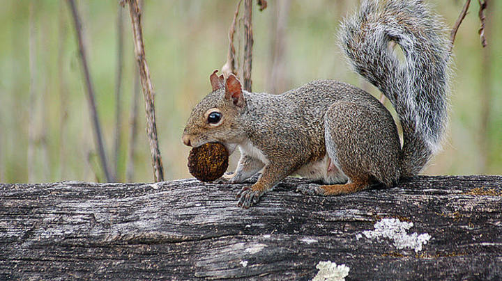Squirrel Ransacks Home While Owners Away on Vacation Preview Image