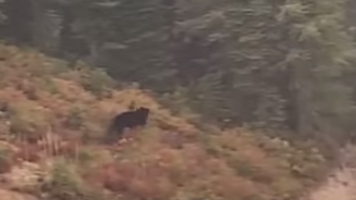 Watch: Bear Chases Mountain Biker Down Trail Preview Image