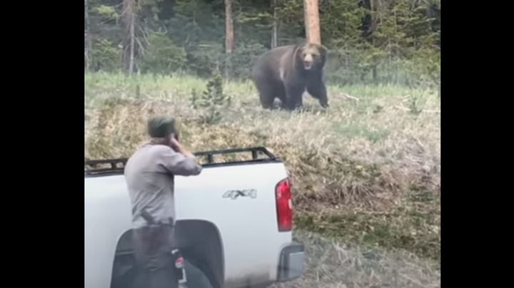 Watch: Yellowstone Grizzly Charges Park Ranger  Preview Image