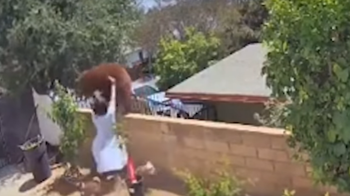 Watch: Woman Pushes Bear Off Wall to Save Dogs Preview Image